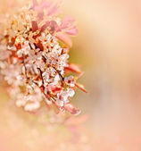 Soft focus on flowering branch — Stock Photo