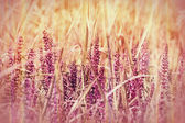 Purple meadow flowers — Stock Photo