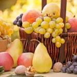 Autumn fruits - organic fruits — Stock Photo #50931081