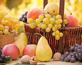Autumn fruits - organic fruits — Stock Photo