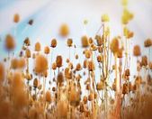 Thistle field - burdock field — Stock Photo