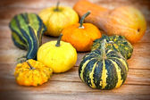 Pumpkin, squash, gourd - autumn harvest — Stock Photo