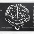 Skills for Right and Left Hemisphere — Stock Photo