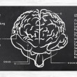 Skills for Right and Left Hemisphere - Stock Photo