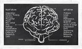 Sağ ve sol hemisfer için becerileri — Stok fotoğraf