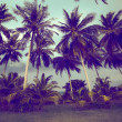 Palm trees — Stock Photo #41536165