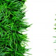 Green grass on white background. — Stock Photo