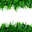 Stock Photo: Green grass on white background.