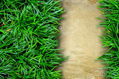 Grass and concrete background. — Foto Stock