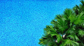 Pool and palm tree from top — Stock Photo