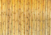 Bamboo wall background — Stok fotoğraf