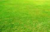 Sfondo di campo di erba verde — Foto Stock