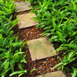 Stone path in the garden — Stock Photo #31090629