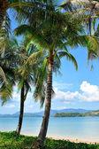 Playa tropical con palmeras en phuket, tailandia — Foto de Stock