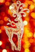 Noel reindeer — Stok fotoğraf