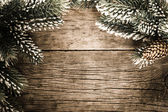 Frame from branch of fir tree — Stock Photo