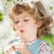 Child blowing on dandelion — Stock Photo