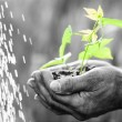 Young green plant in hands — Stock Photo
