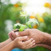 Mladá rostlina proti zeleným pozadím — Stock fotografie