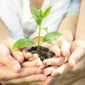 Planta joven en manos — Foto de Stock