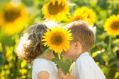 Children hiding by sunflower — Stock Photo