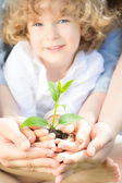 Young tree in hands — Stock Photo