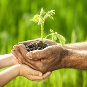 молодое растение на зеленом фоне — Стоковое фото