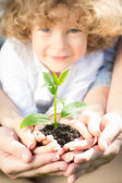 Joven planta verde — Foto de Stock