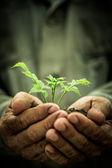 Młodych roślin przeciw tło grunge — Zdjęcie stockowe
