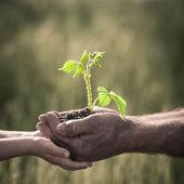 молодое растение темном фоне — Стоковое фото