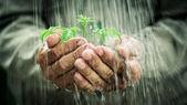 In de regen — Stockfoto