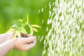 Young plant against green background — Stock Photo