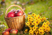 Basket with red apples in autumn — Stok fotoğraf