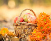 Basket full of red juicy apples — Stock fotografie