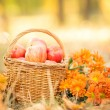 Basket with red apples in autumn — Stock Photo #31360733