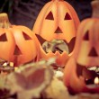 Stock Photo: Scary halloween pumpkins jack-o-lantern candle lit