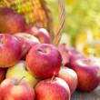 Red apples in autumn garden — Stock Photo #31371689