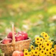 Basket with red apples in autumn — Stock Photo #31767925