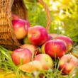 Red apples in autumn outdoors — Stock Photo