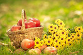 Basket with red apples in autumn — Photo