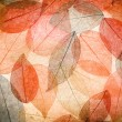 Abstract autumn background — Stock Photo #33133751