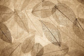 Abstract autumn background — Stock fotografie