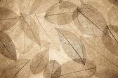 Abstract autumn background — Stock Photo