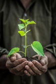 Young plant in old hands against green background — Stock Photo