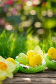 Ovos de páscoa na grama verde — Foto Stock