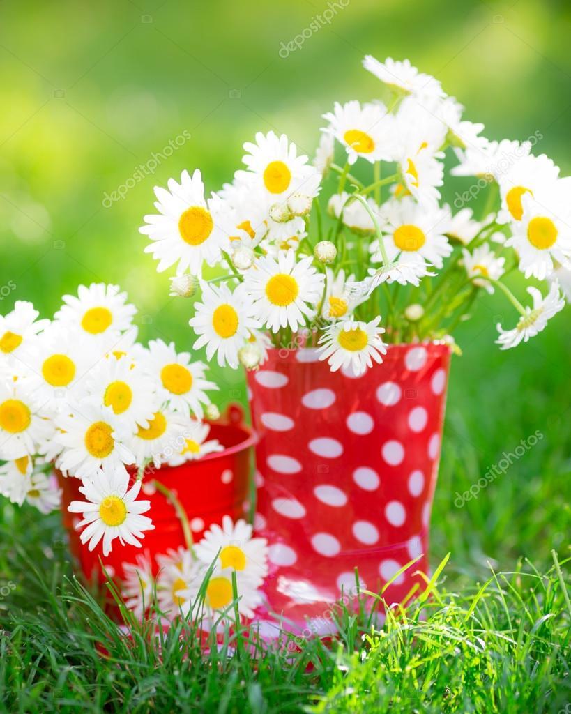 bahar çiçekleri ile ilgili görsel sonucu