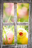 Easter eggs on green grass — Stock Photo