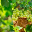 Bunch of white grapes in basket — Stock Photo #42970879
