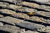 Always Shine And Never Give Up! A small leaf on a frozen stone pavement in wintertime — Stock Photo
