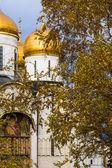 Golden Autumn In Moscow Kremlin — Stock Photo